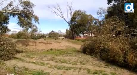 Protestas en el Arraijanal por la tala de sus árboles centenarios