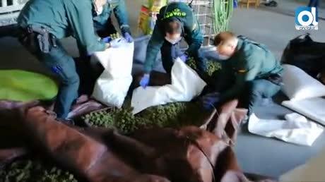 Incautados cien kilos de marihuana en una sofisticada plantación