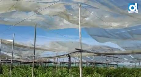 Un tornado destroza cuatro invernaderos en La Algaida