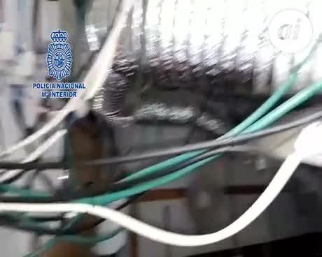 Detenidos 21 integrantes de una red dedicada al tráfico de marihuana
