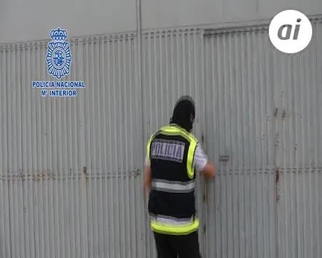 """La policía se incauta 443 plantas de """"maria"""" en un criadero de gallos"""